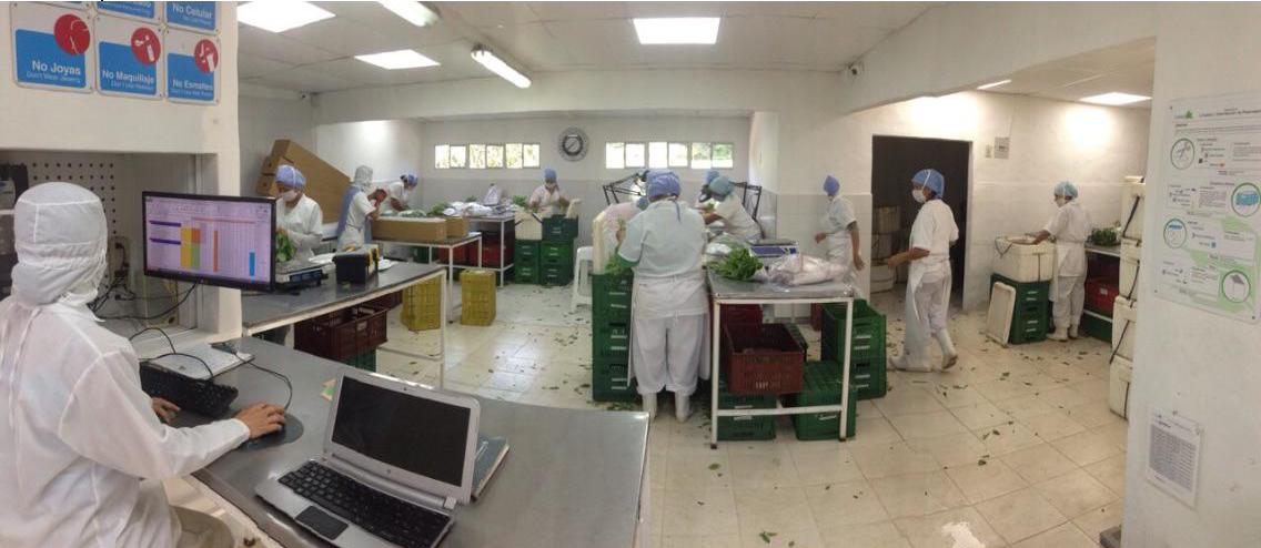 farm fresh bulk herb processing