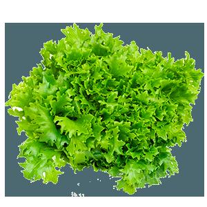 Bulk Lettuce from Greenworld