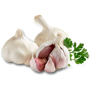 Bulk Garlic Supplier